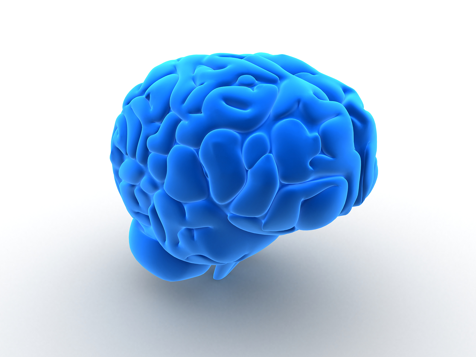 Brain Development and the Forebrain